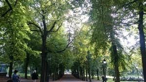Stockholm park by Ingemar Pongratz