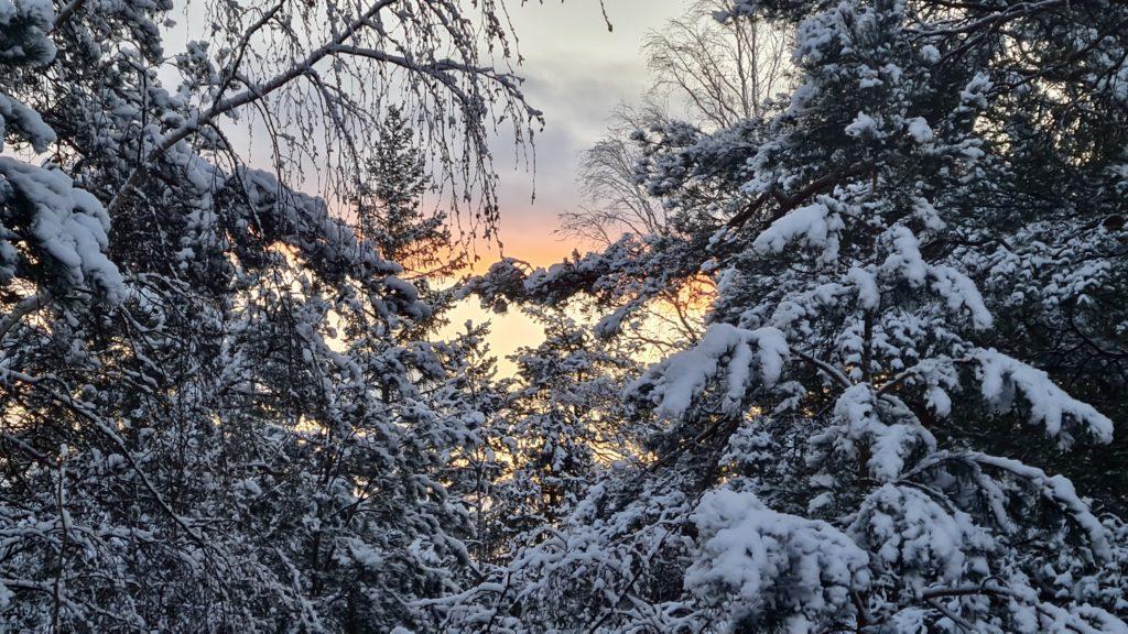 Wintersun by Ingemar Pongratz