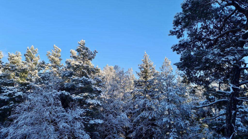 Winterview Sweden by Ingemar Pongratz